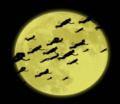 http://www.leslisstory.com/wp-content/uploads/2013/03/Moon-flying-monkeys1.jpg
