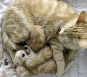 Mother Cat And Her Happy Kittens