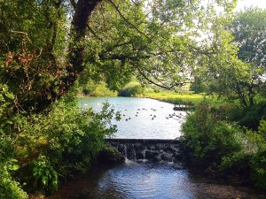 Image-4Pond with Swans 8 2015